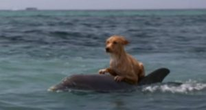 drugarstvo psa i delfina petface