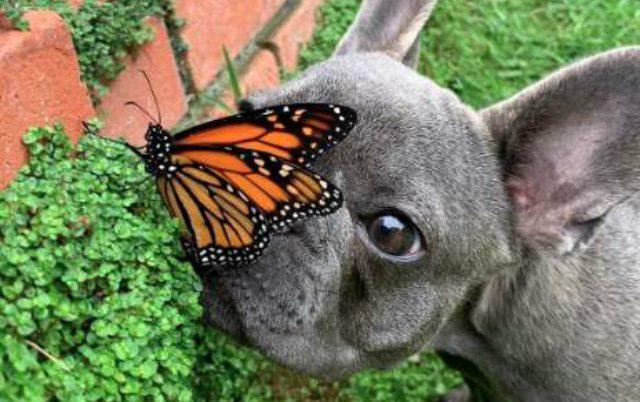 druzenje psa i leptira petface