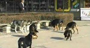 film o napustenim psima srbije petface