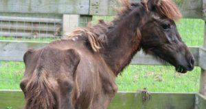 izgladneli konj sa kosutnjaka petface