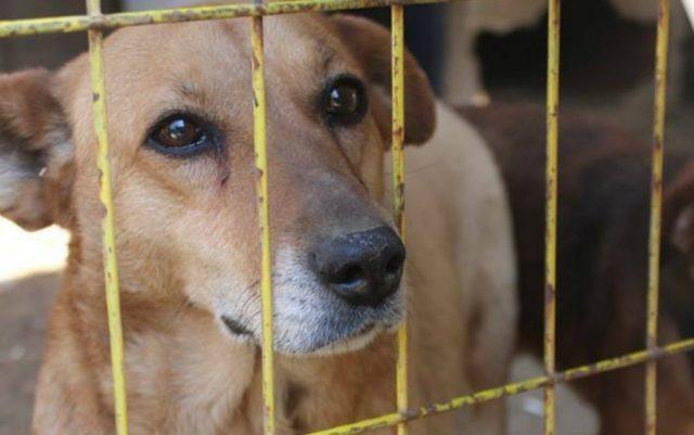 pas koji pati zatovren petface