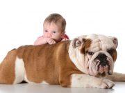 koji su psi najbolji za decu petface