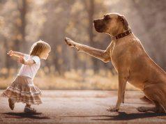 zasto su psi slicni deci petface