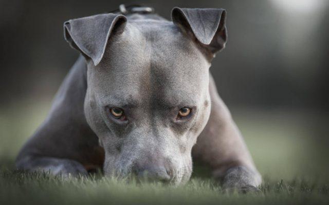 pas u napustenom dvoristu petface