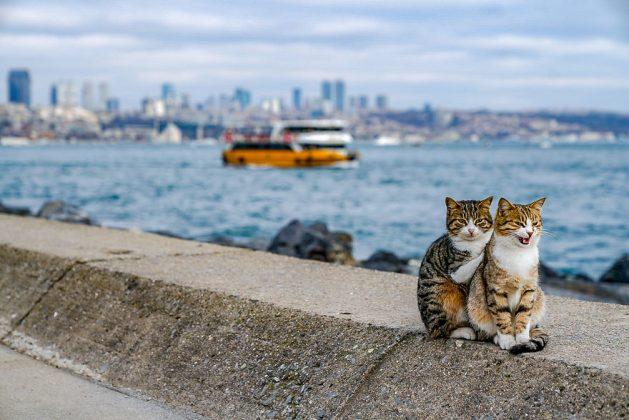 zagrljaj dve mace petface