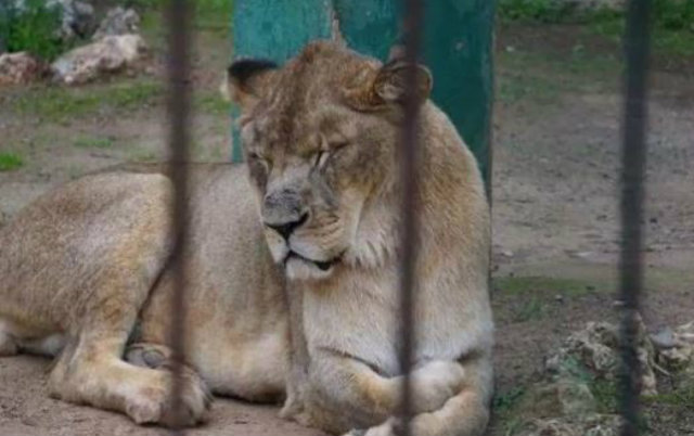 zoo vrt smrti petface