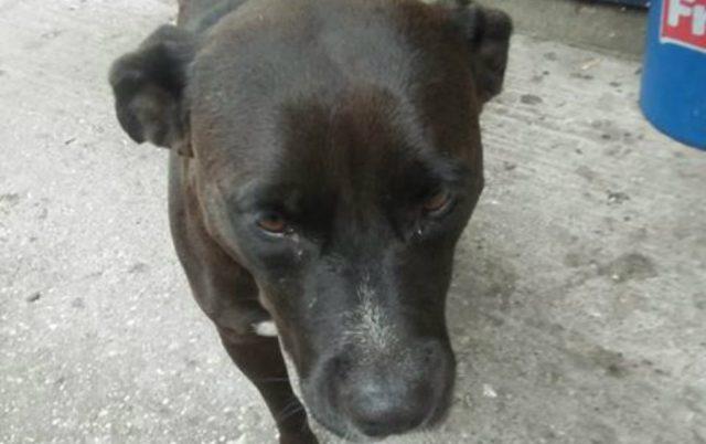 pas osuđen na ulicu petface
