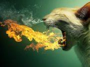 posledice udisanja dima petface