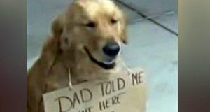 ovaj pas rusi drustvene mreze petface