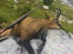 ubijene zivotinje srbije petface