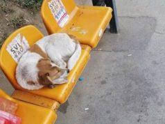pas koji je voleo tramvaje petface
