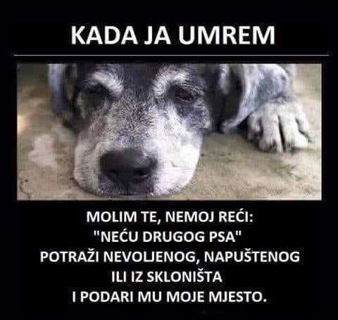 poruka psa petface