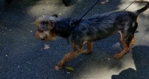 hvatanje pasa uznemirilo javnost petface