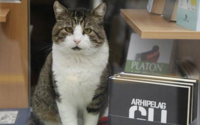 najpoznatiji beogradski macak petface