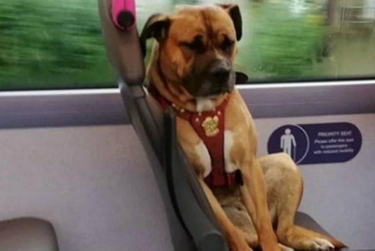 najtuzniji pas na svetu petface