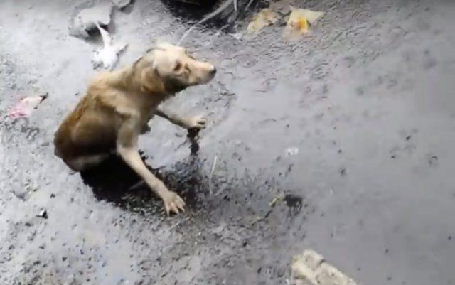 teško povređen pas na kiši petface