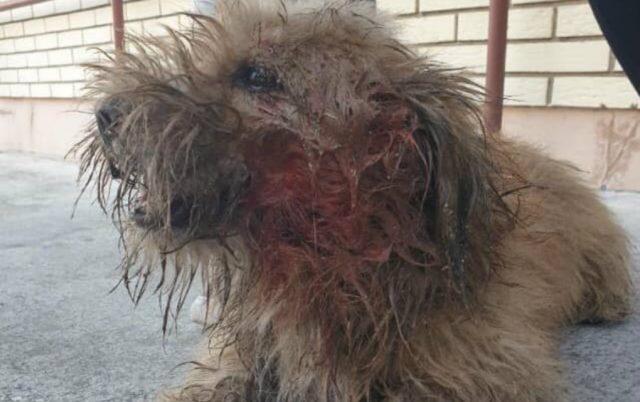 napao drugi pas petface