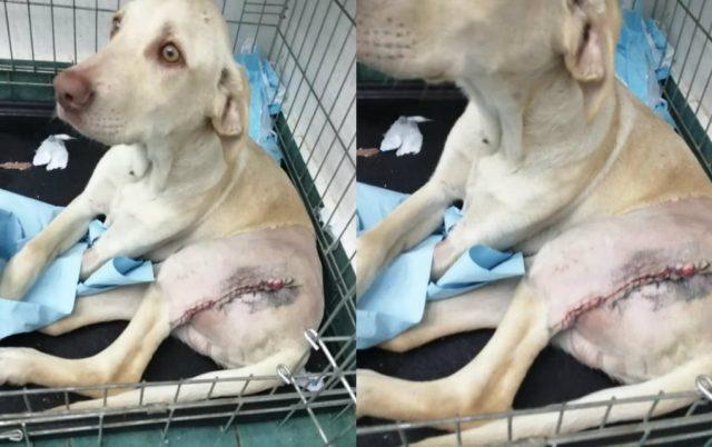 prica odbacenog psa petface