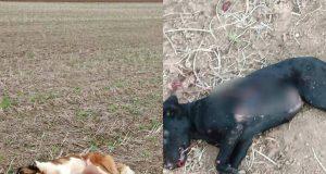 ubijeni psi u martincima petface