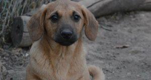 najslađi pas u beogradu petface