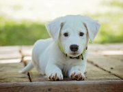 psi nisu krivi petface