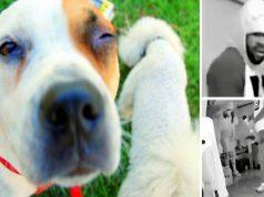 psi u modricama petface