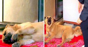 ovaj pas ne moze petface