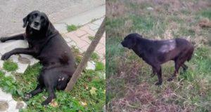 ovaj pas je upucan petface