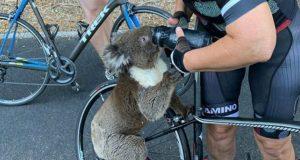 koala zaustavila bicikliste petface