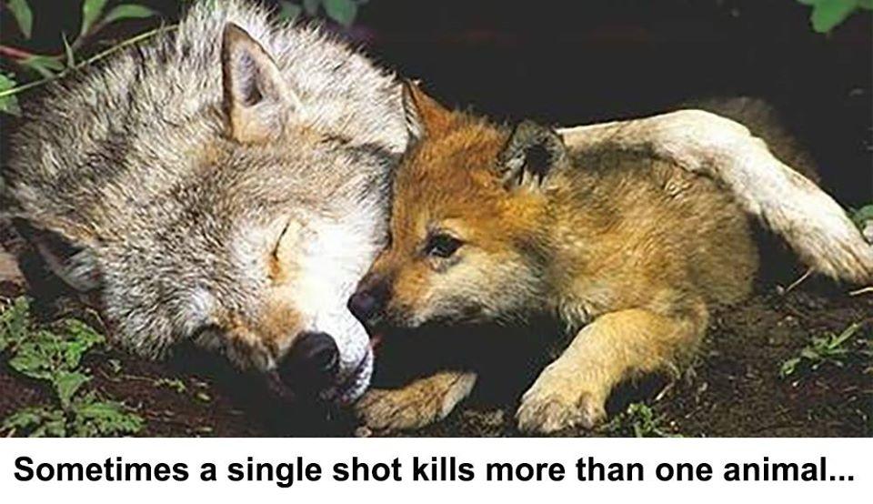jedan metak ubije petface