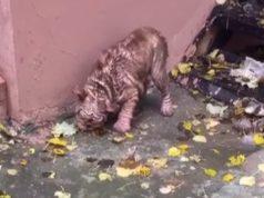 jeo lišće sa ulice petface