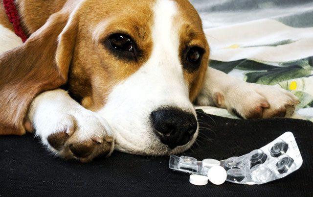 trovanje aspirinom kod pasa petface