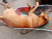 ubistva pasa na jugu petface