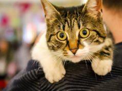 fenomenalna revija maca petface