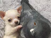 pravo prijateljstvo, petface