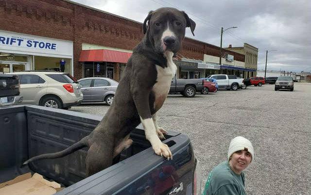 TRKA ZA NOVU PORODICU: Ovaj pas je pretrčao petnaest milja kako bi našao pravi dom!