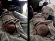 pas pokriva novorođenče petface