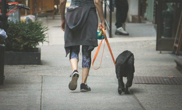 vlasnici pasa imaju zdravije srce petface