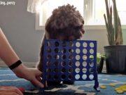 ovaj pas ima talenat, petface