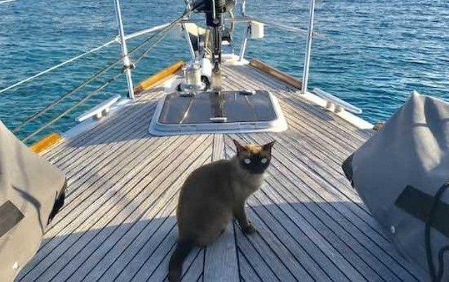 mačka koja plovi petface