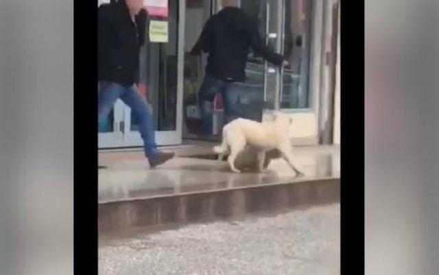 stravično udaranje psa petface