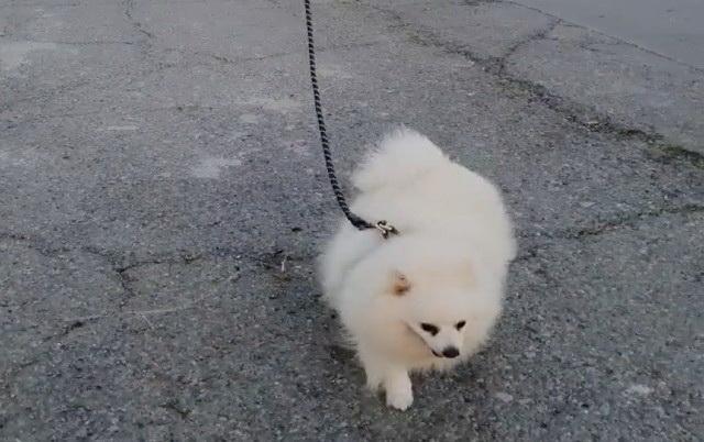 Dron šeta psa, petface