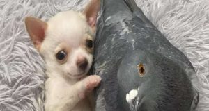 Pas i golub najbolji drugari, petface