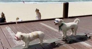 Psi danas i kotrljaju, petface