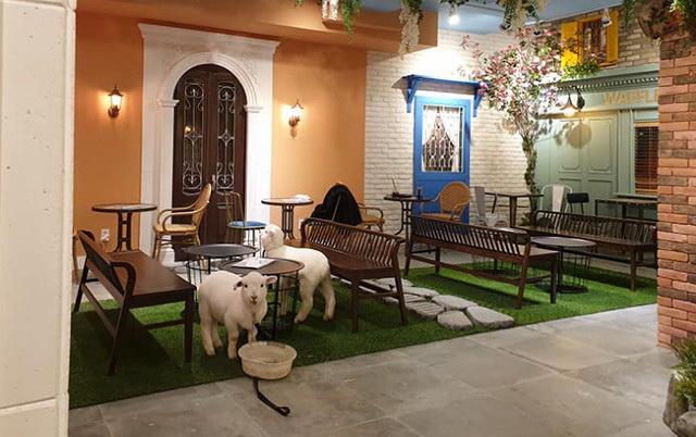 KAFIĆ DA IZBLEJIŠ: I žargonski i bukvalno, blejati je dozvoljeno u ovom kafiću u Seulu u kom žive ovce!