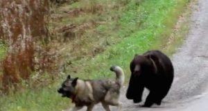 igra psa i medveda petface