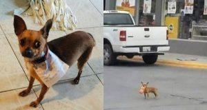 pas koji ide u prodavnicu petface