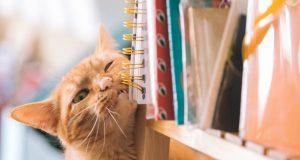 najgora mačka na svetu, petface