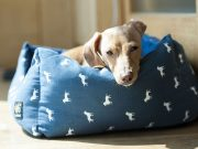kako održavati opremu psa petface