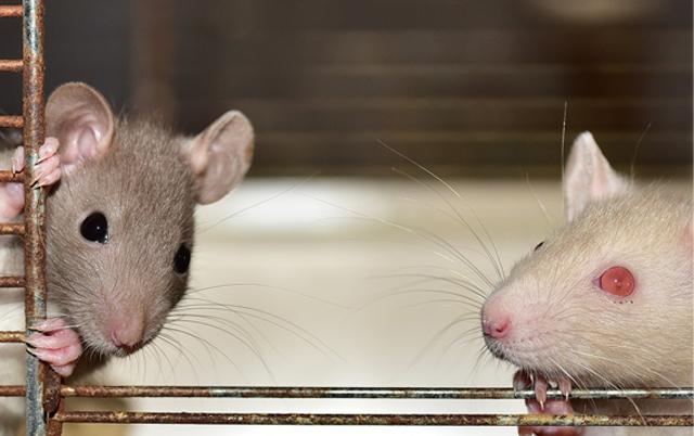 PACOV KAO KUĆNI LJUBIMAC: Pružaju ljubav kao i ostale životinje! (VIDEO)